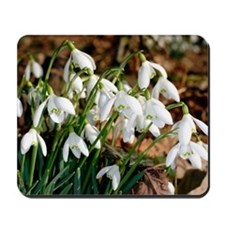 Common snowdrops (Galanthus nivalis) Mousepad