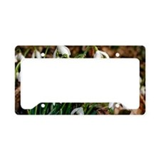 Common snowdrops (Galanthus n License Plate Holder