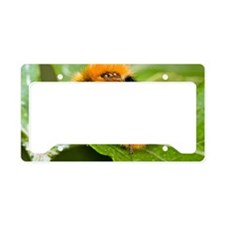Common Carder Bumblebee License Plate Holder