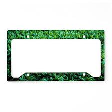 Common box (Buxus semperviren License Plate Holder