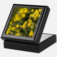 Common Gorse (Ulex europaeus) Keepsake Box