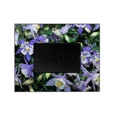 Columbine Picture Frame