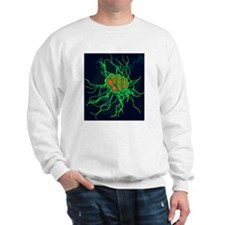 Coloured TEM of Salmonella bacteria Sweatshirt