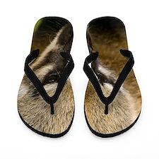 Coati Flip Flops