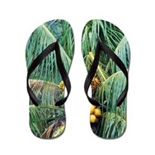 Coconut palm Flip Flops
