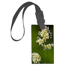 Cocksfoot Grass (Dactylis glomer Luggage Tag