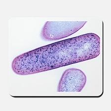 Clostridium difficile bacteria, TEM Mousepad