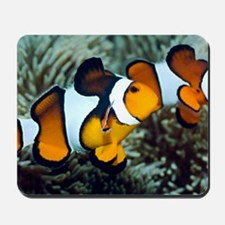 Clown anemonefish Mousepad