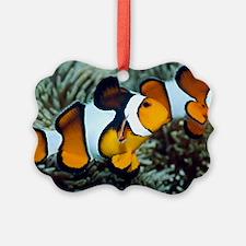 Clown anemonefish Ornament