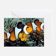 Clown anemonefish Greeting Card