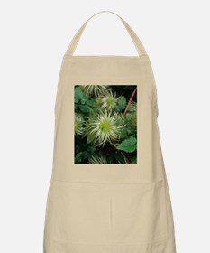 Clematis seed heads Apron
