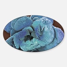 Coccoliths, SEM Sticker (Oval)