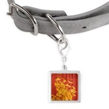 Yellow leaves against a red B Small Square Pet Tag
