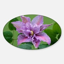 Clematis 'Beate' Decal