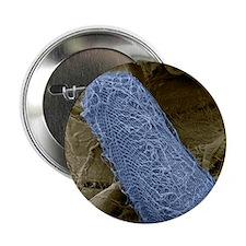 """Ciliate protozoan, SEM 2.25"""" Button"""