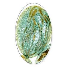 Chloroplast, SEM Decal
