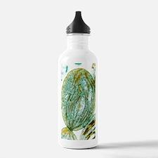 Chloroplast, SEM Water Bottle