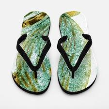 Chloroplast, SEM Flip Flops