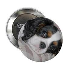 """Cavalier King Charles 2.25"""" Button"""