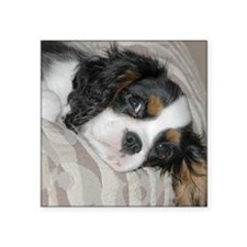 "Cavalier King Charles Square Sticker 3"" x 3"""