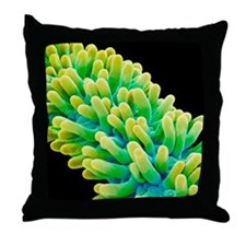 Chickweed flower pistil, SEM Throw Pillow