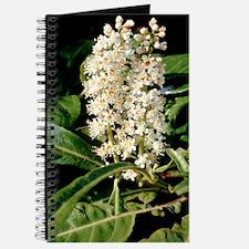 Cherry laurel (Prunus laurocerasus) Journal