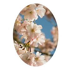 Cherry blossom (Prunus 'Accolade') Oval Ornament