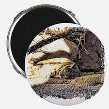 Desert Bobcat Magnet