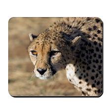 Cheetah Mousepad