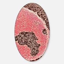 Cell nucleus, SEM Decal