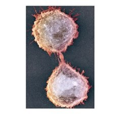 Cell division, SEM Postcards (Package of 8)