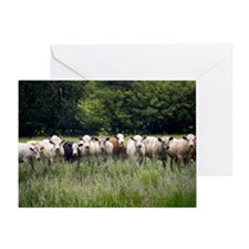 Cattle in a field Greeting Card