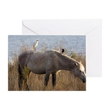 Cattle Egret and Magpie on a horse Greeting Card