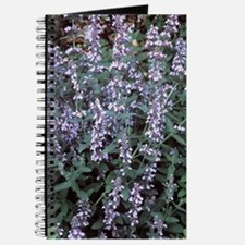 Catmint (Nepeta longipes) Journal