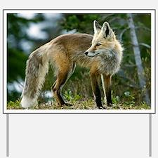 Cascade red fox Yard Sign