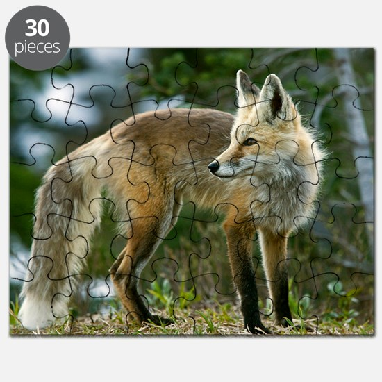 Cascade red fox Puzzle