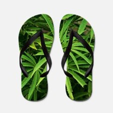 Cannabis plant (Cannabis sativa) Flip Flops