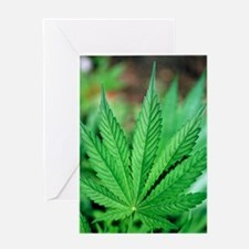 Cannabis leaves Greeting Card