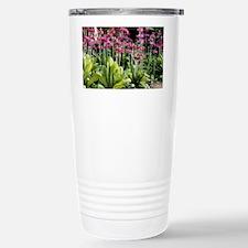 Candlebra primrose (Primula pul Stainless Steel Tr