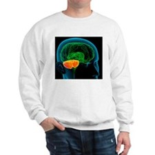 Cerebellum in the brain, artwork Sweatshirt