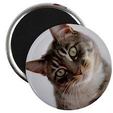 Confused Cat Magnet