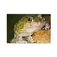 A Couch's spadefoot toad Scaphiop Rectangle Magnet