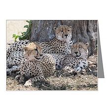 Leopards, Kenya, Africa Note Cards (Pk of 20)