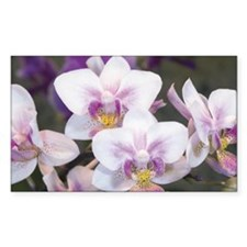 Group of Orchid Oncidium Decal