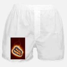 Campylobacter oral bacteria, TEM Boxer Shorts