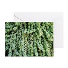 Burro's tail foliage Greeting Card