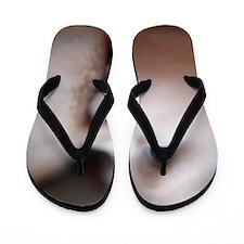 c0042536 Flip Flops