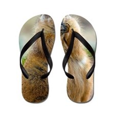Black-tailed Prairie Dog Flip Flops