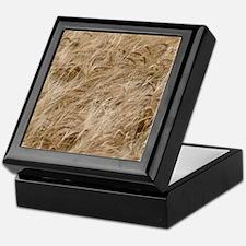 Barley (Hordeum vulgare) Keepsake Box