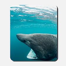 Basking sharks Mousepad